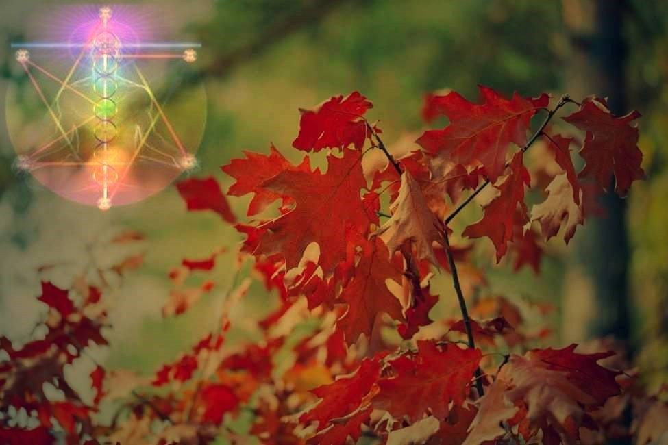 November - Its Energies and Spiritual Meaning - Tony Hyland